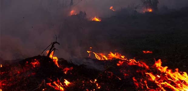 Ways You Can Help the Burning Amazon Rainforest