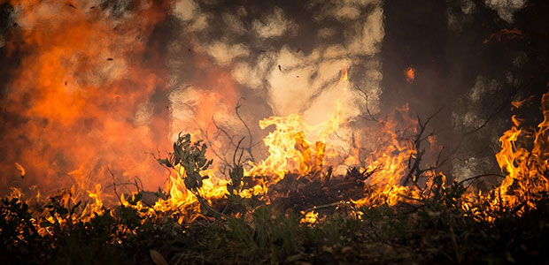 What Are Prescribed Fires and How Are They Used